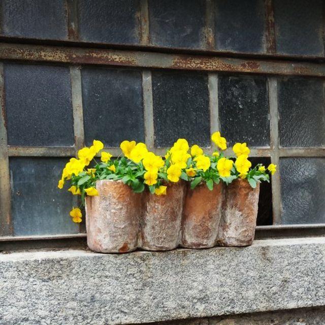 Flores amarillas en Italia