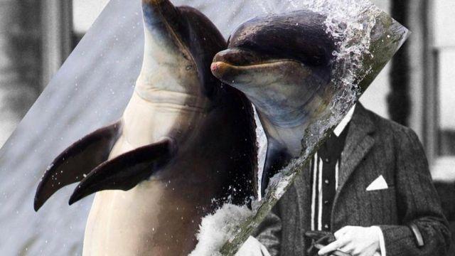 Каждый из нас немного дельфин