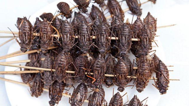 China, Yunnan, Jianshui. Fried cockroaches for sale in Jianshui.