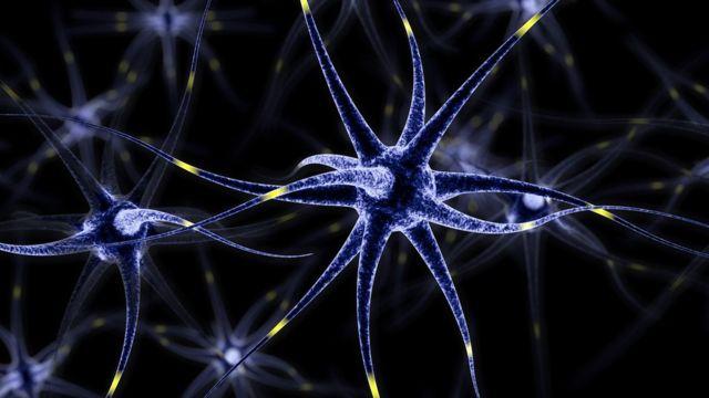 нейроны коры головного мозга