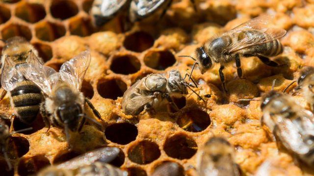 サンプルのうち約3分の1で、ハチに有害な水準の化学物質が検出された