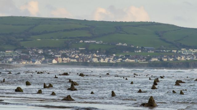 Exposed tree stumps of Borth's underwater forest