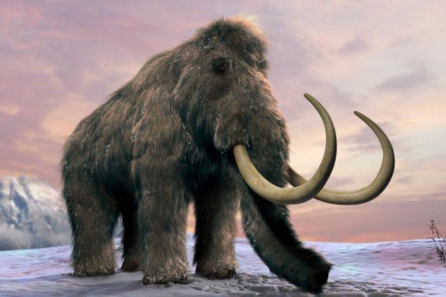 Tüylü mamutların çoğu 10 bin 500 yıl önceye kadar aramızdaydı