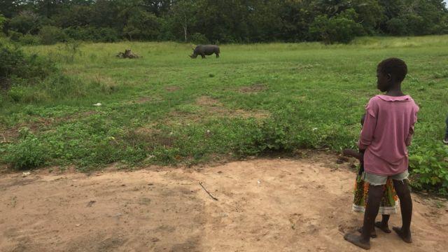 Rhinocéros, Côte d'Ivoire