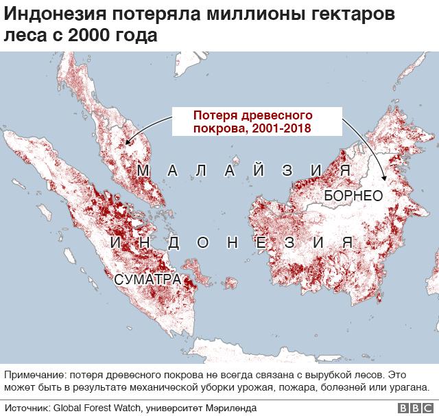 потеря лесов