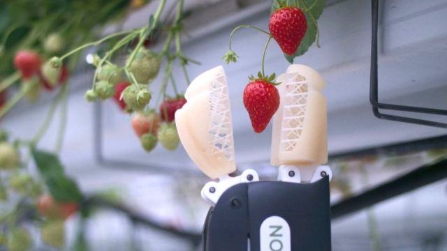 The strawberry-picking robots doing a job humans won't