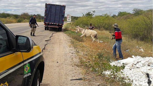 Ação de recolhimento de jumento em estrada no Piauí
