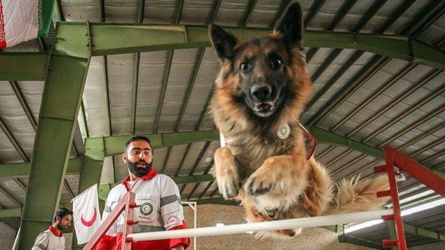 آموزش سگ ها در هلال احمر