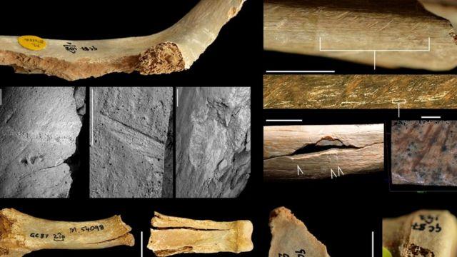 Кости тщательно изучили, чтобы провести различия между надрезами и следами человеческих зубов