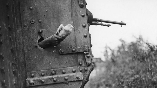 Soldier Letting a Carrier Bird Go.