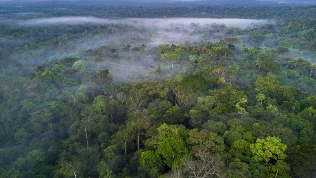 Bosque amazónico