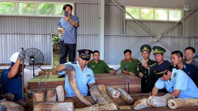 Một vụ tịch thu ngà voi tại Đà Nẵng của giới chức Việt Nam năm 2019