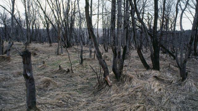 酸雨破壞北歐國家及加拿大的森林