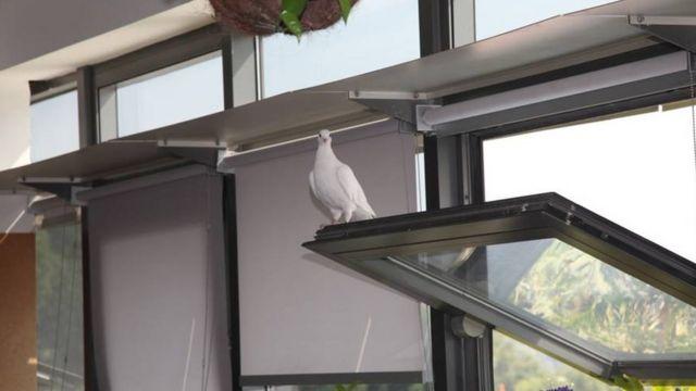 Bird on a window in a green office building