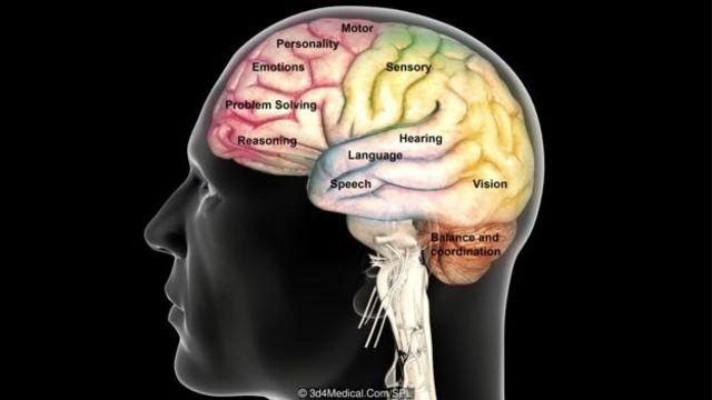 Suara diproses menggunakan bagian otak pendengar, sementara gerakan melibatkan korteks motorik.