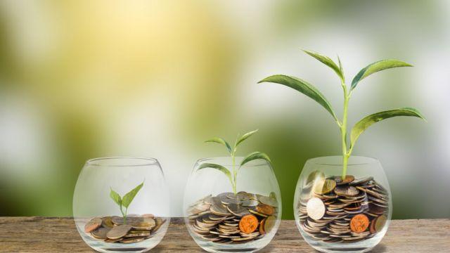 Plantas sobre monedas