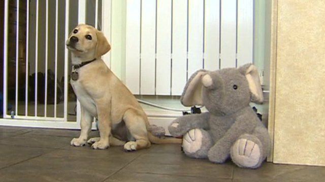 Guide dog puppy with a toy elephant