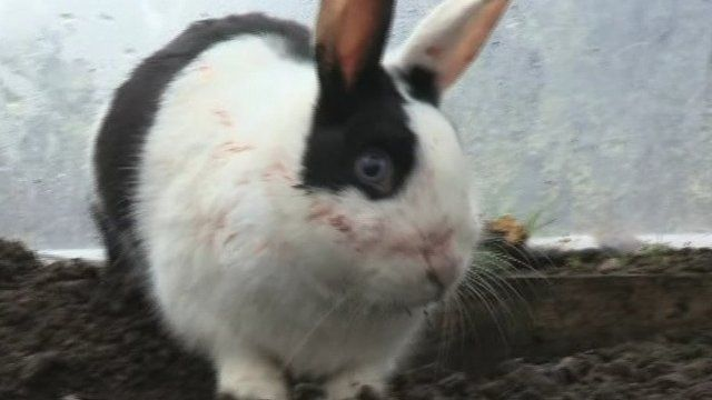 There was a hare raising adventure for a pet rabbit in Omagh