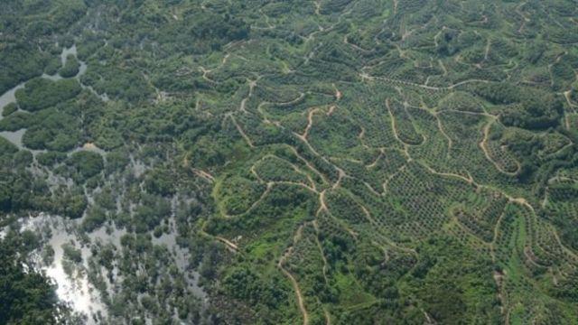 การรุกรานของมนุษย์ด้วยการตัดถนนและทำไร่ ทำให้แหล่งที่อยู่อาศัยของสัตว์ในป่าถูกแบ่งออกไปอย่างกระจัดกระจาย