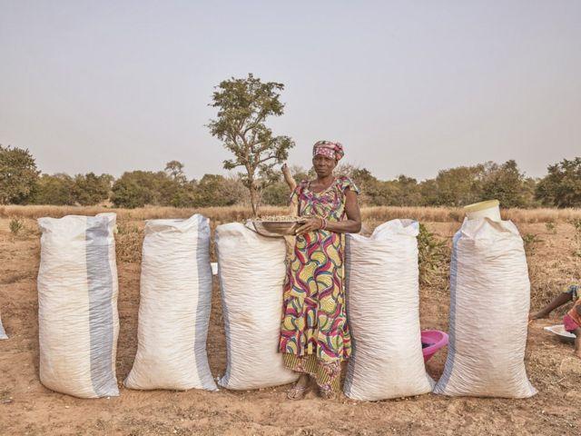 Mariama Ousmane Cissokho, productrice d'arachides