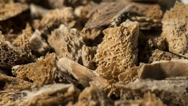 close-up photo of bone fragments