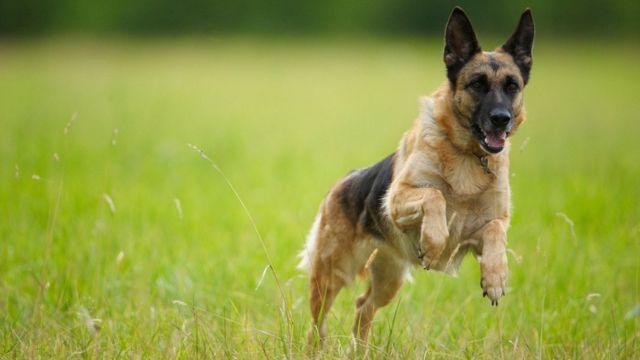 Vitamin D study on pet dogs' health by Edinburgh scientists