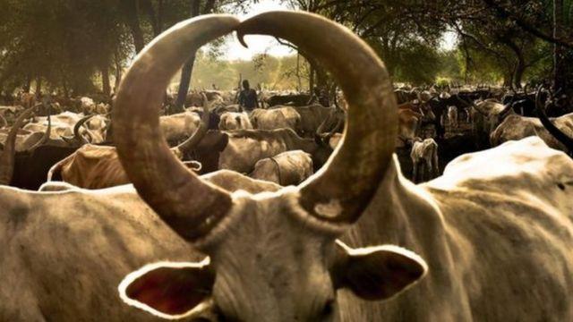إمرأة وسط تجمع لرعي الماشية
