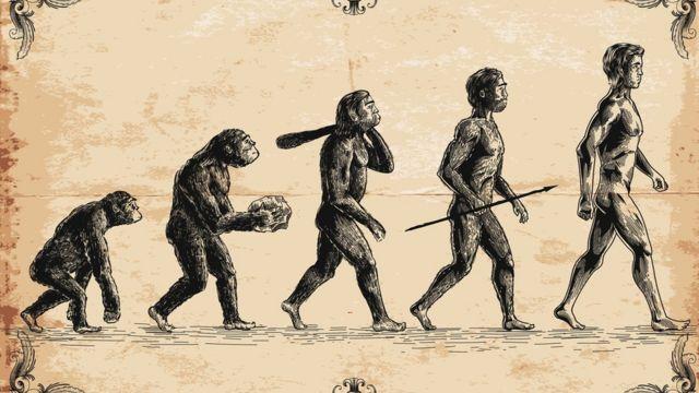 Los humanos y monos tenemos ancestros en comun.