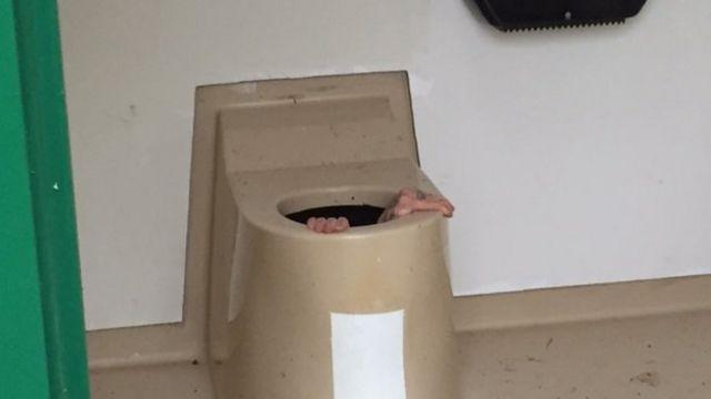 Норвежец, застрявший в туалете