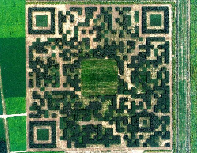 Огромный QR-код из деревьев