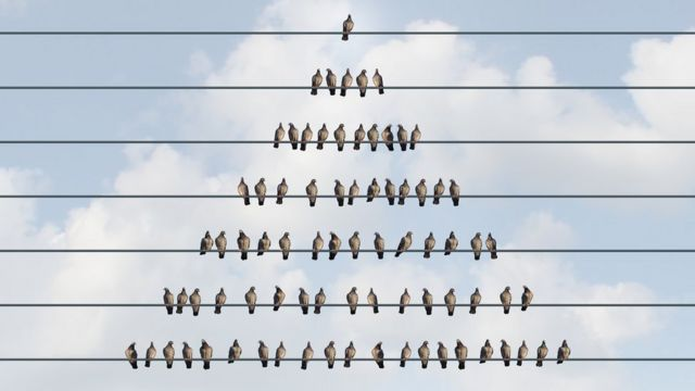 Una pirámide de pájaros.