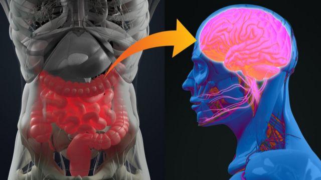 Ilustración del intestino y el cerebro