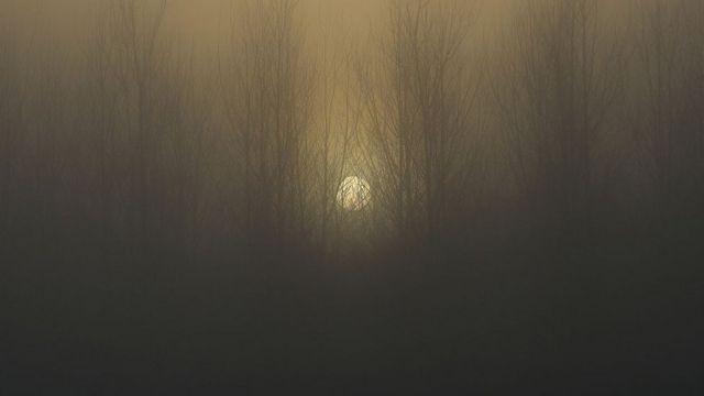 Zalazak sunca u šumi obavijenom maglom