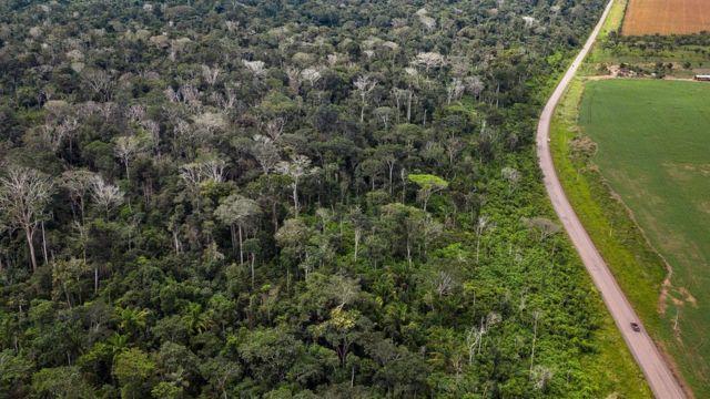 Queimada de floresta amazônica ao lado da BR 163 no Pará mostra grande número de árvores mortas (ou seja, aquelas sem folhas) como resultado dos incêndios