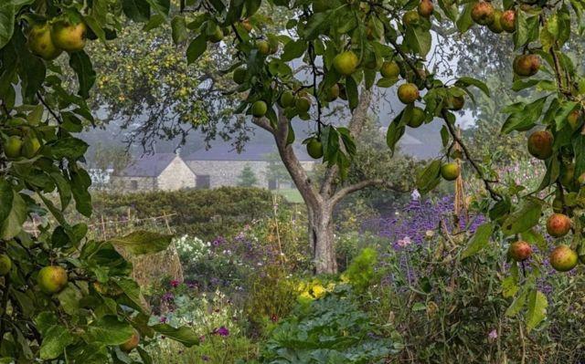 Buah dan bunga pada bulan Agustus di Kebun Aberglasney, Carmarthenshire, Wales, oleh Nigel McCall.