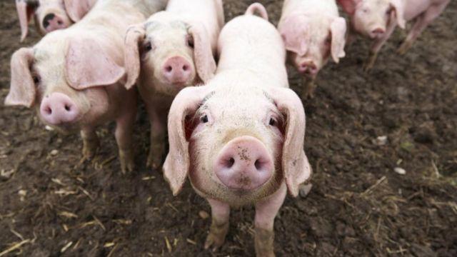 Эксперименты на свиньях показали, что такое сгибание позвоночника, как во время упражнений на пресс, может привести к болям в спине