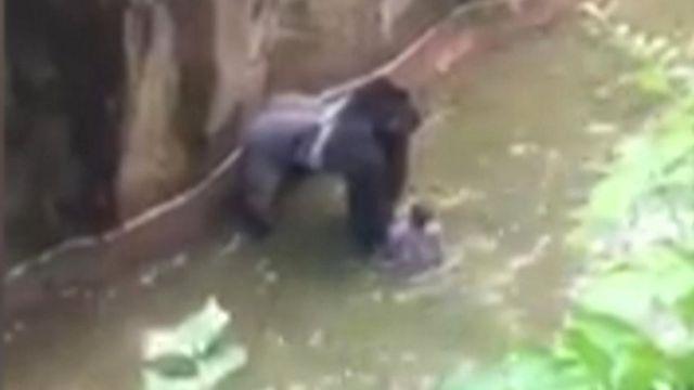 動物園は、男の子は危害を加えられていなかったが危険があったと説明(27日)