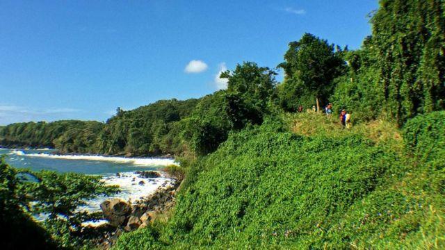 沿海的雨林