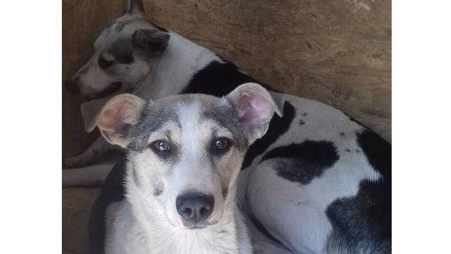 """Собака з """"Центру захисту тварин"""""""