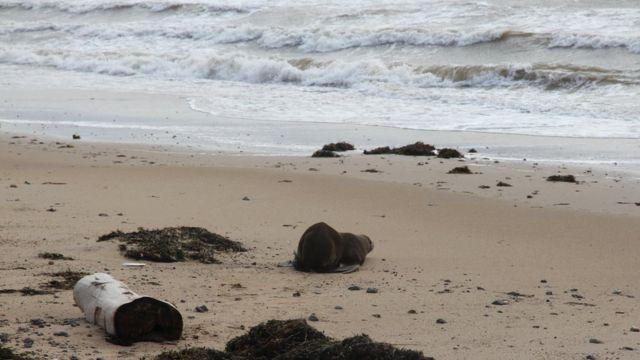 海岸で放されたサミー