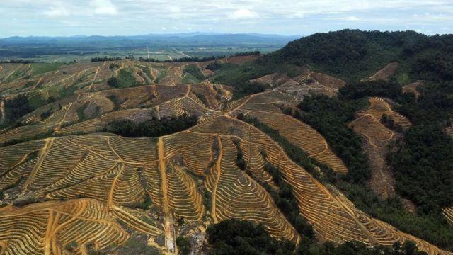 Tingkat deforestasi di Asia tinggi, sering karena pembangunan perkebunan untuk produk-produk seperti minyak sawit.