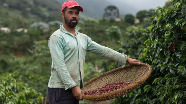 Recolector de café en Brasil