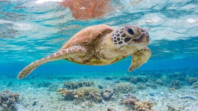 ขยะพลาสติกชิ้นเล็กเพียงชิ้นเดียวทำให้เต่าทะเลถึงตายได้ - BBC News ไทย