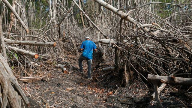 Manglares quemados en Estero Hondo, Puerto Plata, República Dominicana.