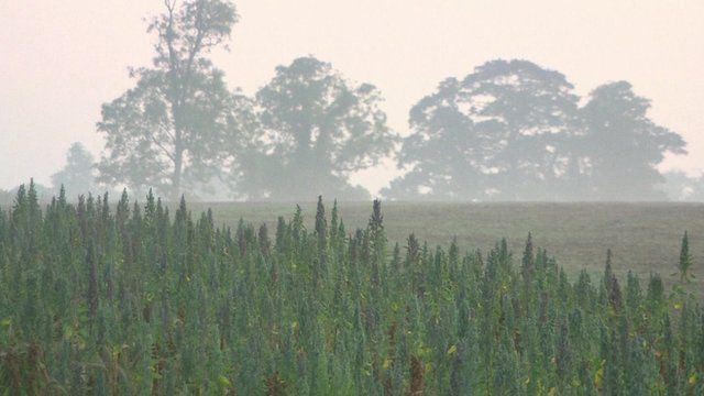 Intensive farming 'behind nature extinction'