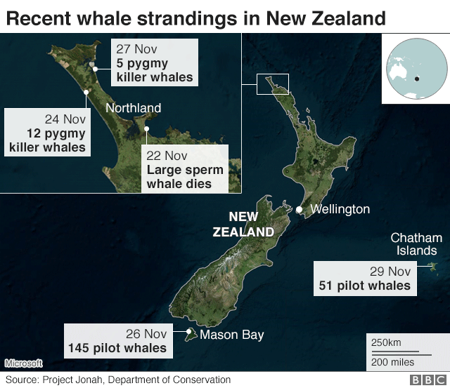 Recent whale strandings in New Zealand map showing five incidents
