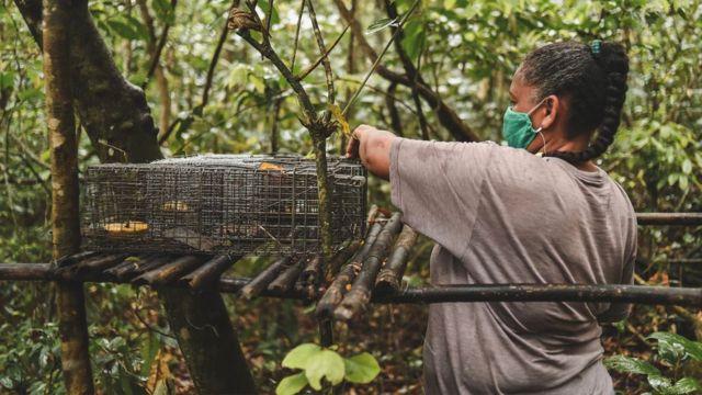 Armadilha para pegar macacos