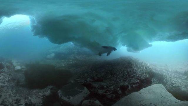 Animal nada debaixo de iceberg