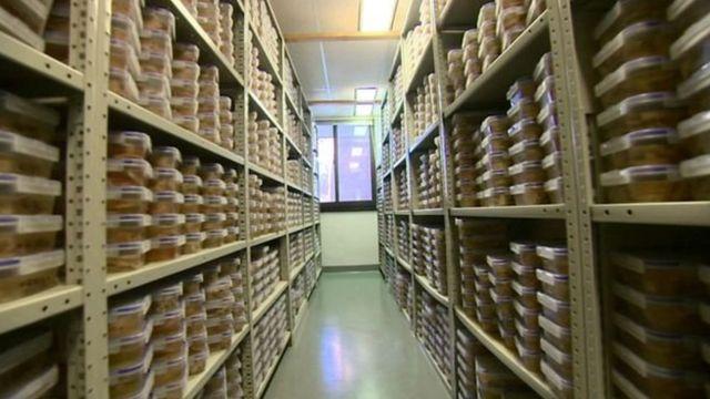 হার্ভার্ড ব্রেইন সেন্টারে আছে তিন হাজারেরও বেশি মস্তিষ্ক