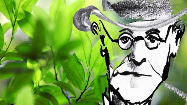 Freud y planta de coca